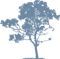 small_blue_tree